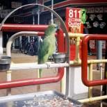 Sheung Shui Town Street Scene 1